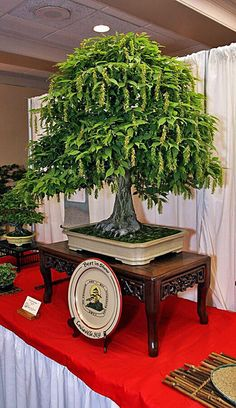 JPB:Bonsai Collection4 | IMG_2479a by americanbonsaisociety, via Flickr