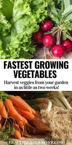 While some veggies take awhile, these quick-growing crops can be ready in as little as 2 weeks! Check out these 20 ideas for fast-growing vegetables and harvest yummy veggies SOON. #gardening #vegetablegardening #gardenhacks Fast Growing Vegetables, Perennial Vegetables, Organic Gardening, Gardening Tips, Sprouting Seeds, Growing Greens, Delicious Fruit, Grow Your Own Food, Back Gardens