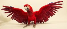 Lola the Green-Winged Macaw: Needle felted by TheWoolenWagon