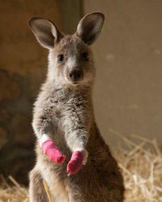 Kangaroo Mittens