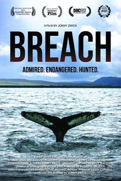 Breach - the must-see film revealing the truth about whaling in Iceland.
