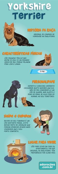 Yorkshire Terrier: história da raça, características físicas, personalidade, temperamento, saúde e cuidados, lugar para viver