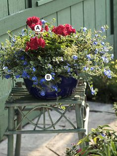 Sometimes simple, straightforward combinations give the biggest impact. Here blue and red offer a stunning presentation. A. Geranium (Pelargonium 'Red Elite') -- 1 B. Evolvulus 'Blue Daze' --  5