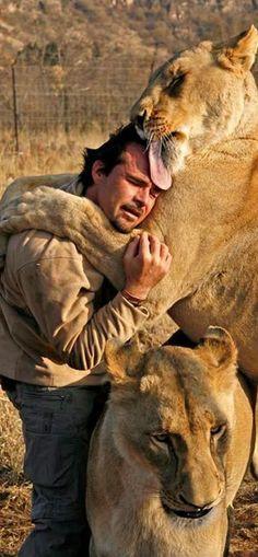 Das ist sooooo wundervoll, da geht mir richtig das Herz auf bei diesem Anblick! Das ist wahre Liebe, gegenseitiger Respekt und tiefes Vertrauen! Von allen Seiten. :-) Kevin Richardson...the lion whisperer. I feel the love.