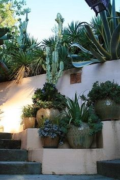 Pots with succulents at entry stairs from street - David Feix Landscape Design via coolchicstylepensiero Cacti And Succulents, Planting Succulents, Planting Flowers, Potted Plants, Succulent Ideas, Succulent Wall, Pot Jardin, Desert Plants, Garden Planters
