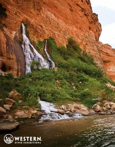 Beautiful greenery sprouts up around water outpourings from Grand Canyon walls #green #orange #adventure