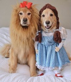 dog halloween costumes 35 Fun Pet Costumes for Halloween to Be Your Best Partner Cute Dog Costumes, Pet Halloween Costumes, Dogs In Costumes, Partner Costumes, Animals In Costumes, Costume Ideas, Cute Funny Animals, Cute Baby Animals, Funny Dogs