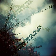 """Tree"" #Lomography #Lomo #AnalogueLove #Lomo"