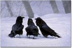 Three Ravens in the Snow, uncredited
