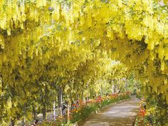 10+ Reasons You Should Drop Everything And Go To Japan's Wisteria Festival ASAP