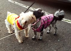 Fetch Dog Fashions is a small dog clothing boutique Dog Pictures, Cute Pictures, Boy Dog Clothes, Small Dogs, Boutique Clothing, Puppies, Animals, Fashion, Moda