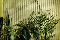 Plants, Living Room, Plant, Planets