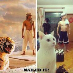"""Nailed it"" meme joke pic: Life of Pi imitation... For more great humor and funny pics visit www.bestfunnyjokes4u.com/lol-funny-cat-pic/"