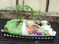 Growing Tomatoes in Potting Soil Bags. Maybe this will keep the squirrels from digging up my tomatoe seedlings next year. Growing Tomato Plants, Easy Plants To Grow, Growing Tomatoes In Containers, Tomato Seedlings, Organic Fertilizer, Organic Gardening, Gardening Tips, Vegetable Gardening, Container Plants