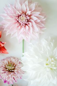 wit and delight Flower Power, My Flower, Fresh Flowers, Beautiful Flowers, Pink Flowers, Growing Dahlias, Wit And Delight, Deco Floral, Floral Arrangements