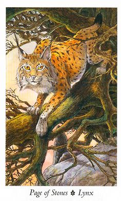 Wildwood Tarot Page of Pentacles — is known for being patient and diligent, much like the Lynx in this card. Lynx, Wildwood Tarot, Page Of Pentacles, All Tarot Cards, Celtic Mythology, Christian Symbols, Tarot Card Meanings, Card Book, Tarot Card Decks