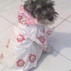 Patrones de suéter para perro | Mimi y Tara Dog Diapers, Dog Wear, Dog Pattern, Fox Terrier, Whippet, Dog Harness, Pet Clothes, Pet Accessories, Pet Portraits