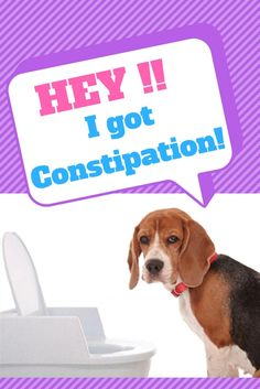 what to do if your dog is constipated