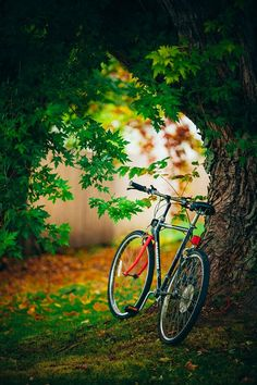 Bicycle Resting Against an Autumn Tree, Fall Photography, Cycling, New England, Vermont, Nature, Fal