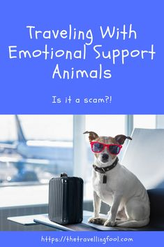 More and more people are traveling on airlines with emotional support animals. Everything from dogs and cats to chickens. Is it a scam? Airline Travel, Pet Travel, Travel Tips, Best Airfare, Dog Friendly Holidays, Emotional Support Animal, Ultimate Travel, Dog Friends, Trip Planning