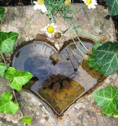 Artist PerfectPicture Pin Party P S It would be lovely to make a square concrete block sink a heart shaped mould into it and create a lovely mini pool like this for the garden So pretty It would soon age too More # Dream Garden, Garden Art, Garden Design, Yoga Garden, Garden Whimsy, Garden Pool, Heart In Nature, Special Flowers, Heart Decorations
