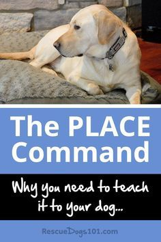 How The Dog Place Command Changed My Life Dog Training Tools