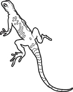 realistic lizard coloring pages