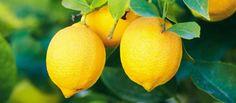 Lemon mousse | Soviet Cooking | Almost Forgotten Recipes