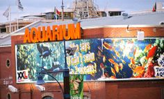 Discover the motion of the Two Oceans Aquarium I Cape Town Ocean Aquarium, Stuff To Do, Things To Do, Cape Town, Oceans, My World, Two By Two, Fair Grounds, Fun