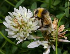Honey bee facts: quick, fun snippets of information about honey bees with links to further information.