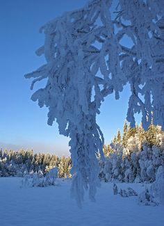 Blue winter day  - Vestmarka, Norway.