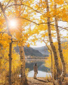 June Lake is one of the four lakes inside the June Lake Loop! #seasons #fall #outono #autumn #fallseason #leaves #coloursofautumn @jude_allen