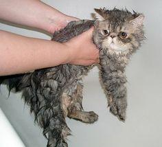 ネコを洗いすぎてとんでもない状態になった写真が話題に|| ^^ |秒刊SUNDAY