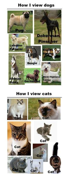 hahahahahahahaha. all cats are the same