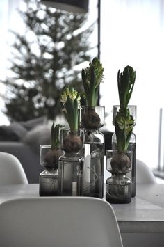 Grafitgrå - This is a furniture site, I think they sell the vases somewhere here. Re-potting for Amaryllis? Christmas Mood, Noel Christmas, Scandinavian Christmas, White Christmas, Planting Bulbs, Planting Flowers, Amaryllis, Deco Floral, Christmas Inspiration
