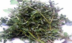 La Portulaca è una pianta ritenuta infestante per i terreni. E' molto ricca di acidi grassi della serie Omega 3 e come tale di valido aiuto per la nostra salute.Va usata come insalata in modo da utilizzare nel modo migliore le proprietà degli Omega 3.Non va cotta. Omega 3, Medicine