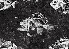 Martina Scott - Anglerfish skeleton