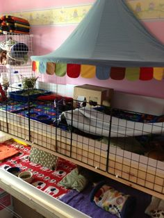 Over the top guinea pig cage....but you know you love it!