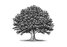 http://www.theimaginativeconservative.org/wp-content/uploads/2016/01/oak-tree-.jpg