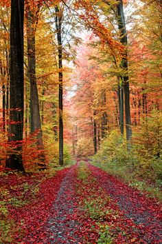 Autumn forest road in October