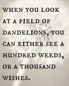 When you look at a field of dandelions, you can either see a hundred weeds, or a thousand wishes.