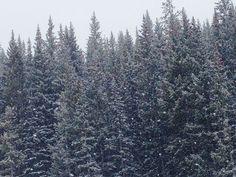 scenic Vail Mountain, Mountain Style, Snow, Outdoor, Outdoors, Outdoor Games, Human Eye