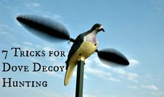 Tricks for Dove Decoy Hunting | Outdoor Channel, #Hunting