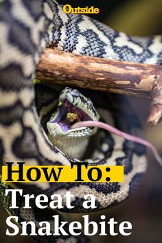 Essential Survival Tips How to treat a snakebite and 4 other essential survival tips.How to treat a snakebite and 4 other essential survival tips. Survival Weapons, Apocalypse Survival, Survival Knife, Survival Prepping, Survival Gear, Survival Skills, Emergency Preparedness, Survival Gadgets, Urban Survival