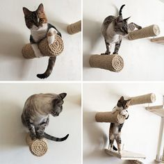 Cats Toys Ideas - Crazy Sisal Cat Climbers from CatastrophiCreations! — hauspanther - Ideal toys for small cats Bb Chat, Cat Climber, Diy Cat Tree, Cat Playground, Cat Room, Cat Condo, Pet Furniture, Luxury Furniture, Furniture Ideas