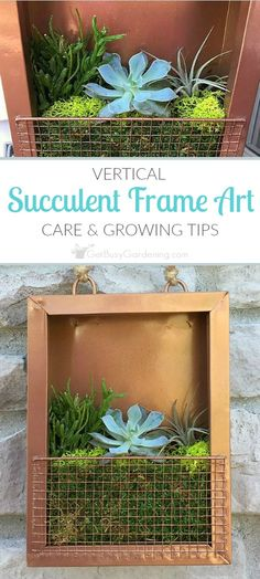 A living succulent portrait adds life to dull spaces. Find the perfect spot to hang your succulent frame, and keep it thriving with these care tips. (AD)