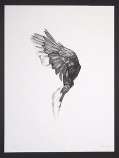 """Here's an absolutely stunning set of art prints from Von. Titled """"Flight"""", and exploring the unique anatomy of birds"""