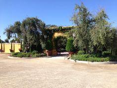 Viaggio Winery (Lodi, CA)