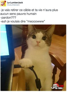 Ta vie n& plus aucun sens humain - Funny True Quotes, Funny Memes, Hilarious, Animal Memes, Funny Animals, Cute Animals, Computer Jokes, Rage Comic, Video Humour