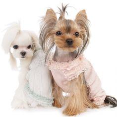 Гламурные собаки